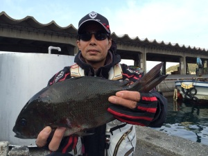 北九州の平山さん、良型クロGET