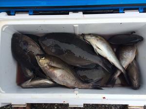 宮崎の梁井さん、クロ、イサキ数釣りを楽しんだ