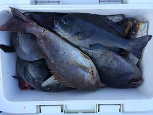 北九州の山澄さん、磯釣りを楽しんだ