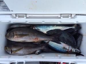 佐伯市の後藤さん、磯釣りを楽しんだ