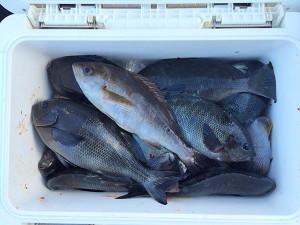 北九州の竹尾さん、磯釣りを楽しんだ