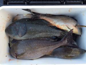 北九州の中村さん、40cmオーバーのイサキなど、磯釣りを楽しんだ
