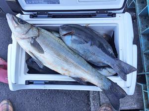 北九州の加藤さん、初釣りを楽しんだ
