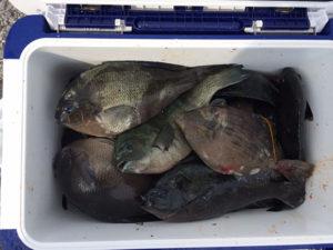 行橋の松崎さん、クロとカワハギの数釣りを楽しんだ