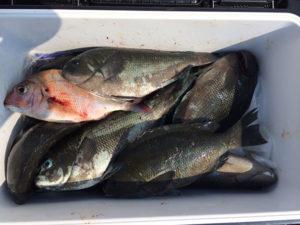 北九州の中村さん、磯釣りを楽しんだ