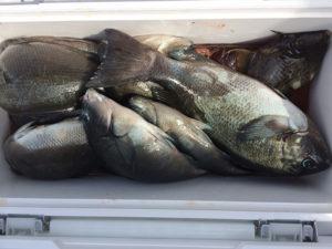 みやこ町の吉元さん、磯釣りを楽しんだ