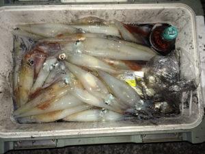 夜焚きのイカ釣り始まりました。豊後大野市の朝倉さん、100杯近く釣りました。好スタートです。