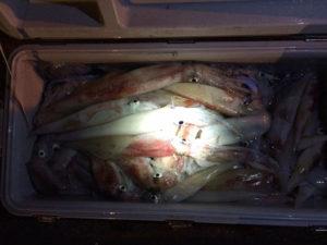 大分の伊藤さん、夜焚きのイカ釣り、60ℓクーラー満タン