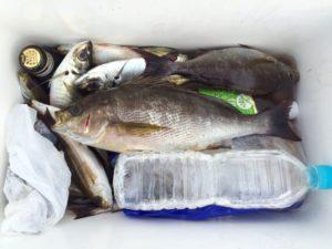 大分の藍沢さん、磯釣りを楽しんだ