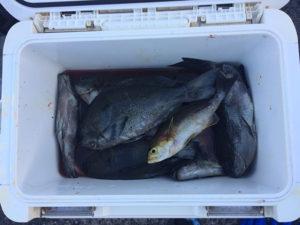 遠賀郡の竹尾さん、磯釣りを楽しんだ