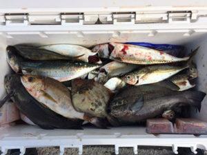 北九州の広島さん、夜釣りを楽しんだ