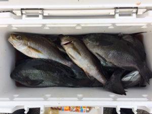 中津の鷹崎さん、磯釣りを楽しんだ。