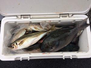 佐伯市の後藤さん、良型アジ、クロ釣りを楽しんだ