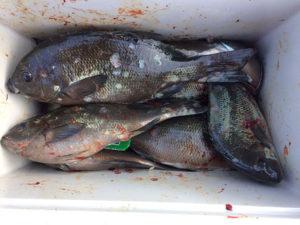 豊後大野の田多さん、クロ釣りを楽しんだ