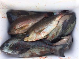 北九州の田中さん、磯釣りを楽しんだ