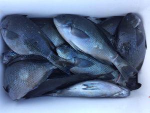 北九州の小倉さん、クロ釣りを楽しんだ