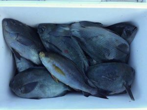 津久見の江藤さん、磯釣りを楽しんだ