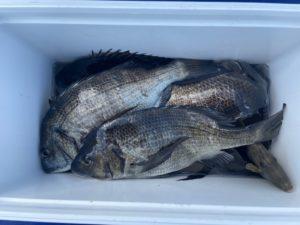 中津の佐藤さん、チヌ釣りを楽しんだ